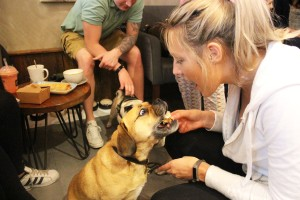 woman feeds her pug at pop up pug cafe