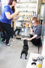 birthday celebration at pop up pug cafe