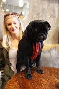 black pug at pop up pug cafe