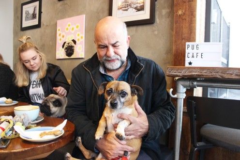 cute jug and his owner at pop up pug cafe