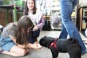 young girl feeds pug at pop up pug cafe