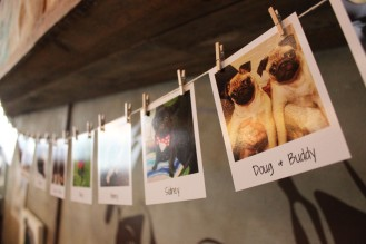 pug polaroids at pop up pug cafe