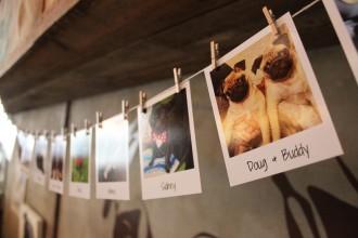 pug polaroids at pop up pug cafe