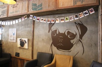 pug sticker at pop up pug cafe