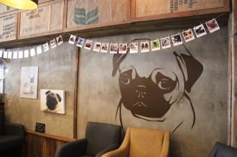 pug sticker at pop up pug cafe