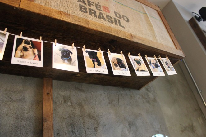 polaroids at pop up pug cafe