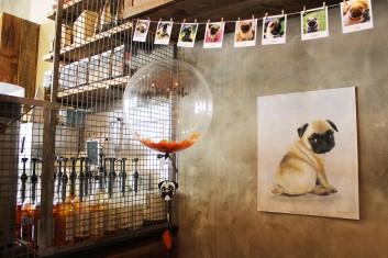 pug art and balloon at pop up pug cafe