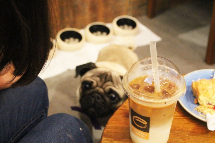 pug and ice drink at pop up pug cafe