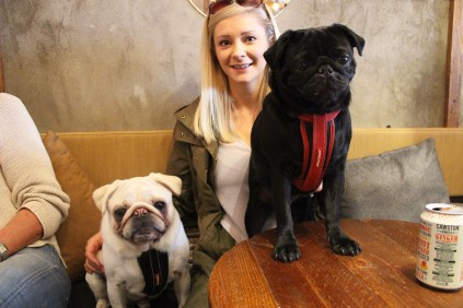 white and black pugs at pop up pug cafe