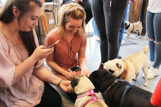women photo the pugs at pop up pug cafe