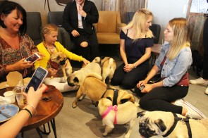 grumble of pugs at pop up pug cafe