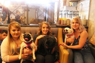 pugs with their owners at pop up pug cafe