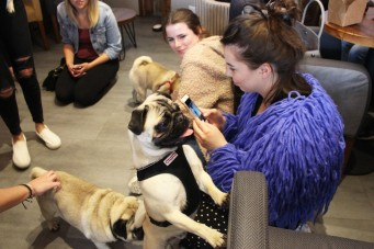 girl takes photo of pugs at pop up pug cafe