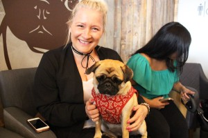owner with her little pug at pop up pug cafe