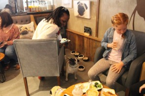 people having fun at pop up pug cafe