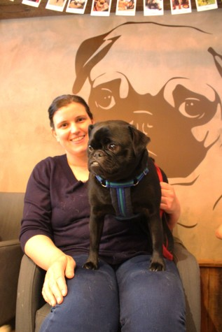 pug cross sits on lap at pop up pug cafe
