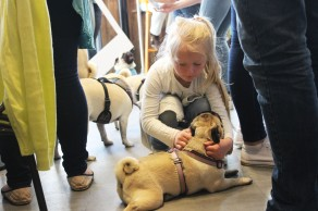 child plays with her pug at pop up pug cafe