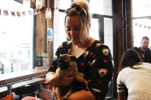 owner holds her pug at pop up pug cafe