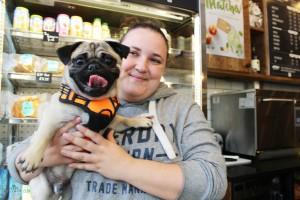 happy pug at pop up pug cafe
