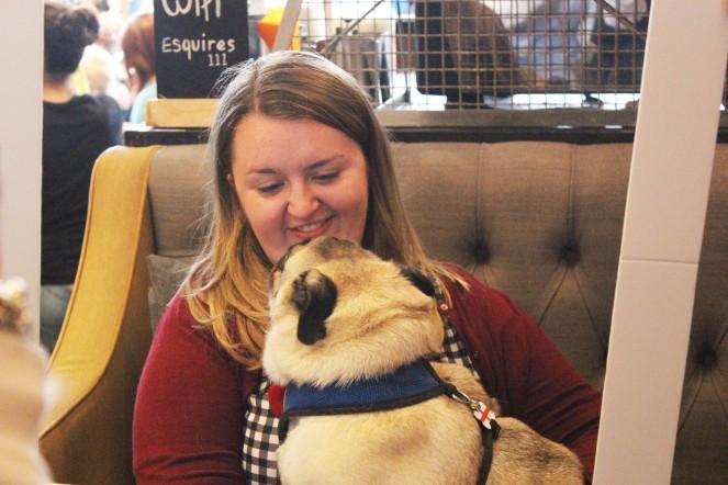 pug owner through a frame at pop up pug cafe
