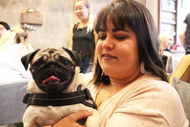 pug owner holds her pug at pop up pug cafe