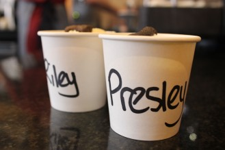 puguccinos at pop up pug cafe
