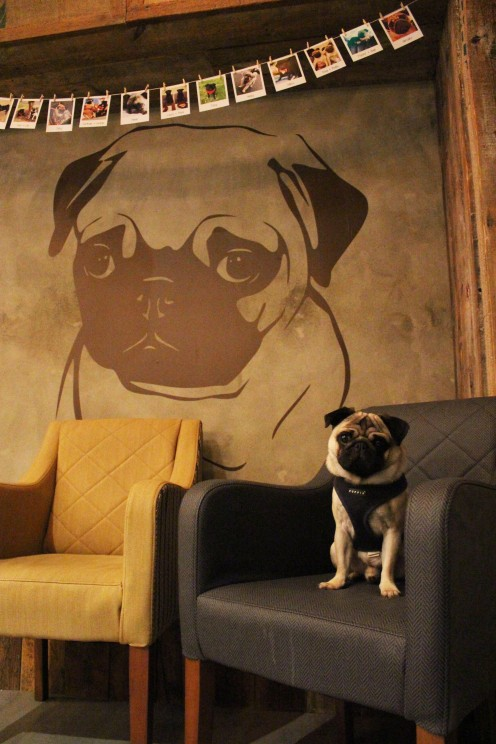 pug and giant wall sticker at pop up pug cafe