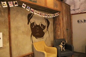 giant pug wall sticker at pop up pug cafe