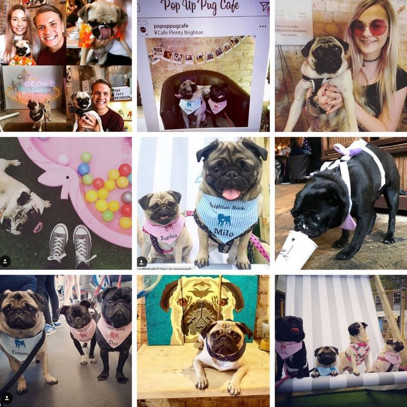 Pug Cafe Famous Events on Instagram