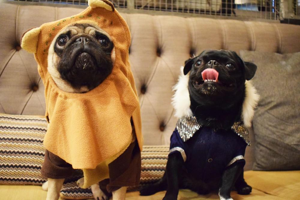 Halloween Pug Cafe