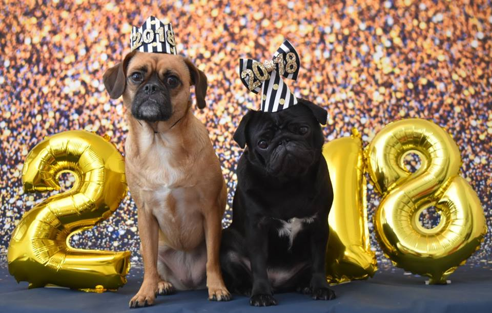 Pug Cafe New Year Chinese