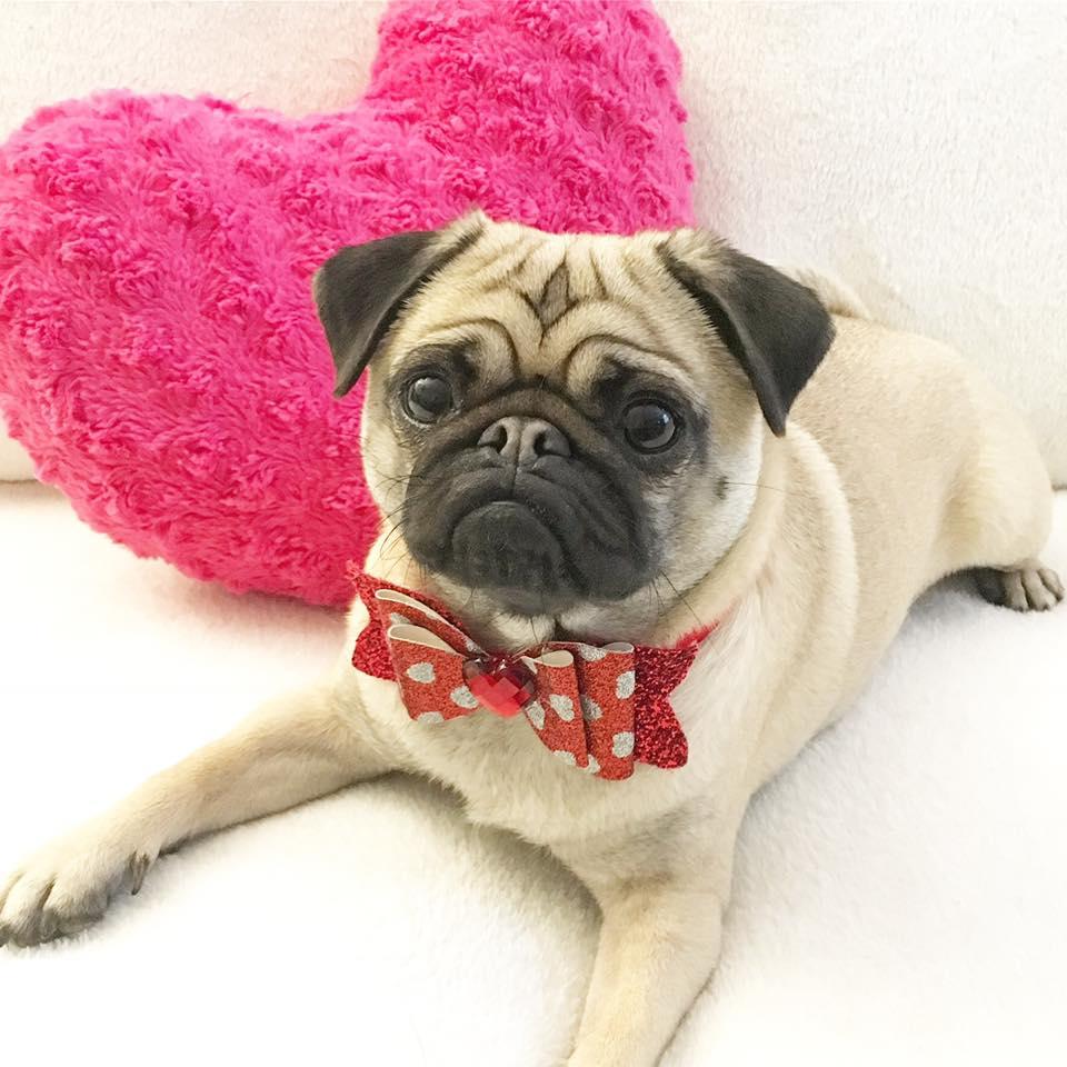 Valentines Pug Cafe