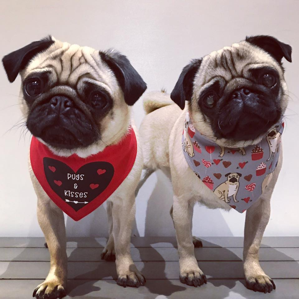 Pug Cafe Valentines