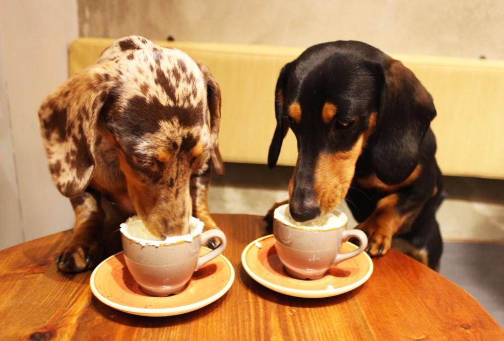 Dachshund Cafe Pupuccinos