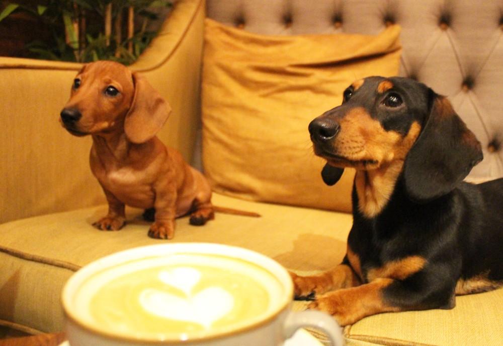 Dachshund Cafe Dog Sofa