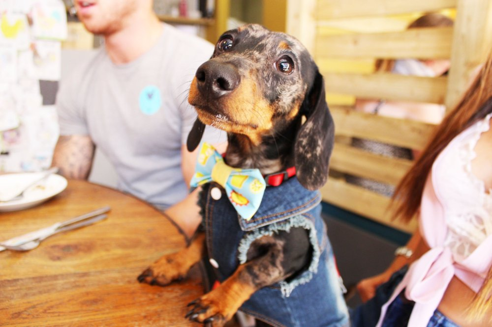 dachshund cafe london