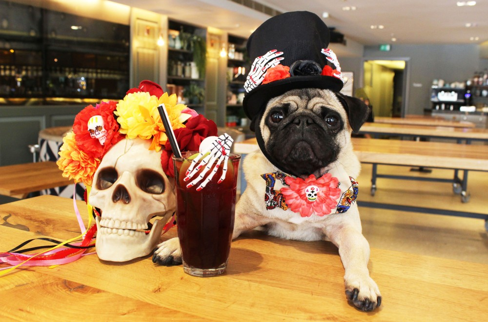 pug cafe halloween day of the dead london