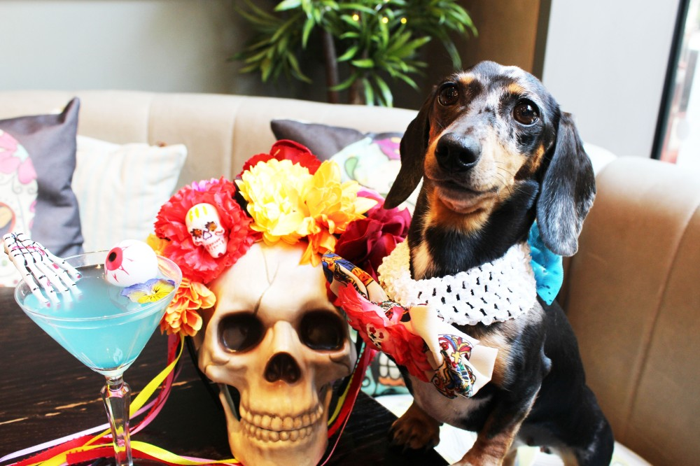dachshund cafe halloween day of the dead london