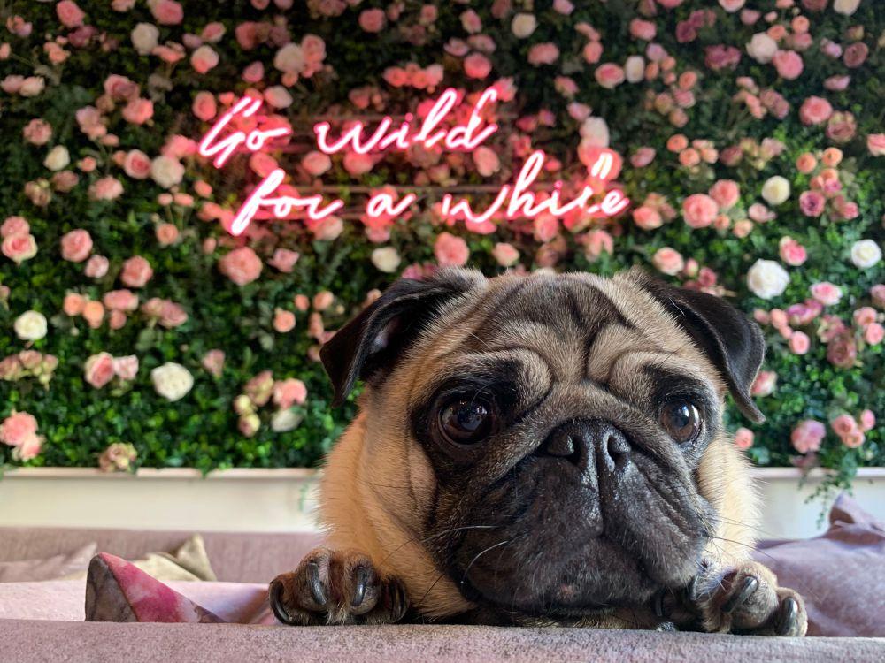 pug cafe flower wall florist bristol