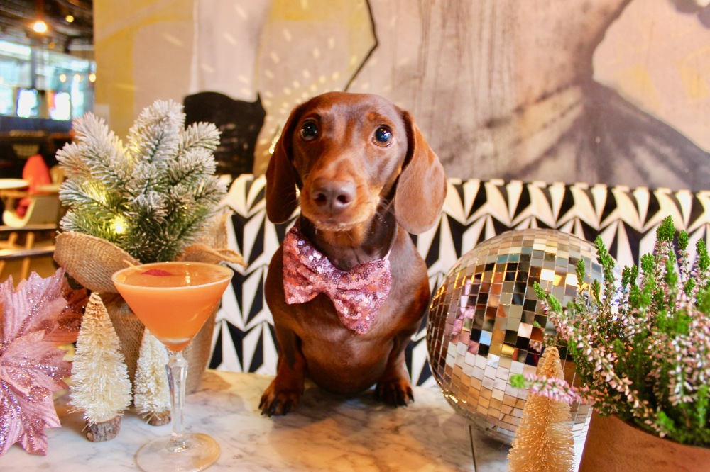 christmas dachshund cafe