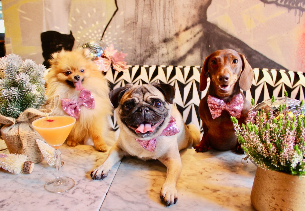 pug cafe pom cafe dachshund cafe london